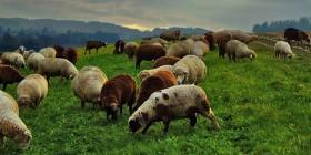 Agriculture : guide des �coles et formations