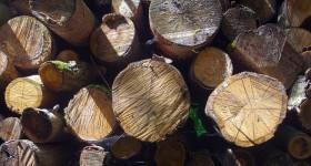 Bois et papier : guide des �coles et formations