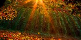 Vins et spiritueux : guide des �coles et formations