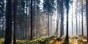 BTSA Gestion Foresti�re : programme, d�bouch�s et poursuite d'�tude
